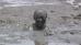 Mud Girl 2