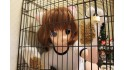 Captured in a cage - Calico cat girl -