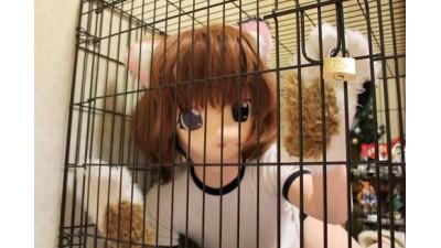 三毛猫娘を檻監禁